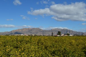 Murcia_20150222